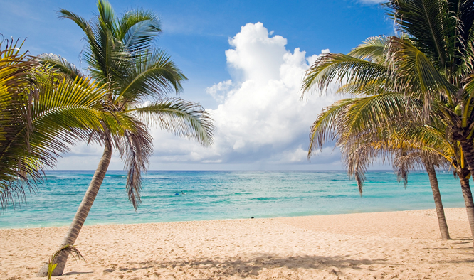 Zonvakantie, palmbomen, strand