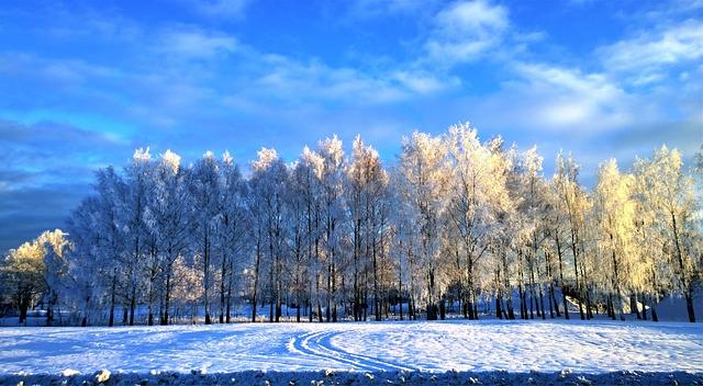 Winter natuur bomen sneeuw